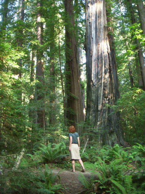 Kavu in the Redwoods