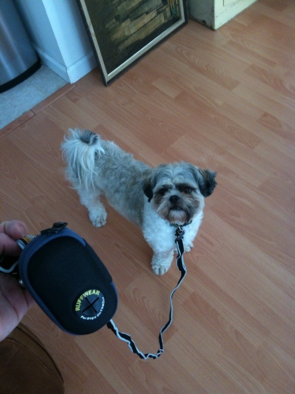 Cool Leash