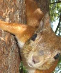 Sciurphobia - fear of squirrels.  You'll only have a squirrel problem if you sleep like a rock and have an open can of roasted nuts sitting on your chest.