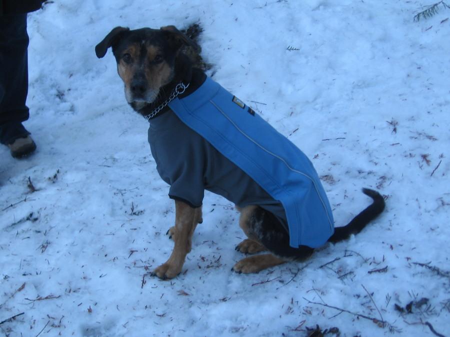 Tough, durable dog jacket