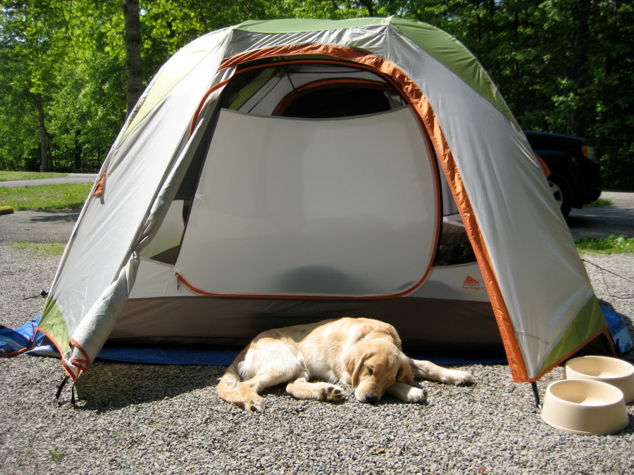 Great tent.. very spacious