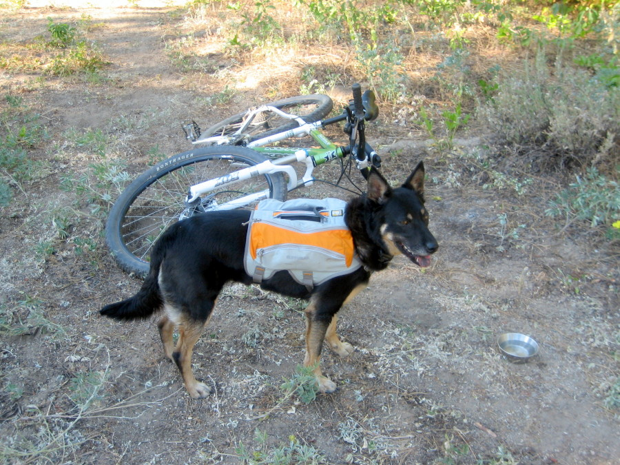 great pack for mt biking with your dog