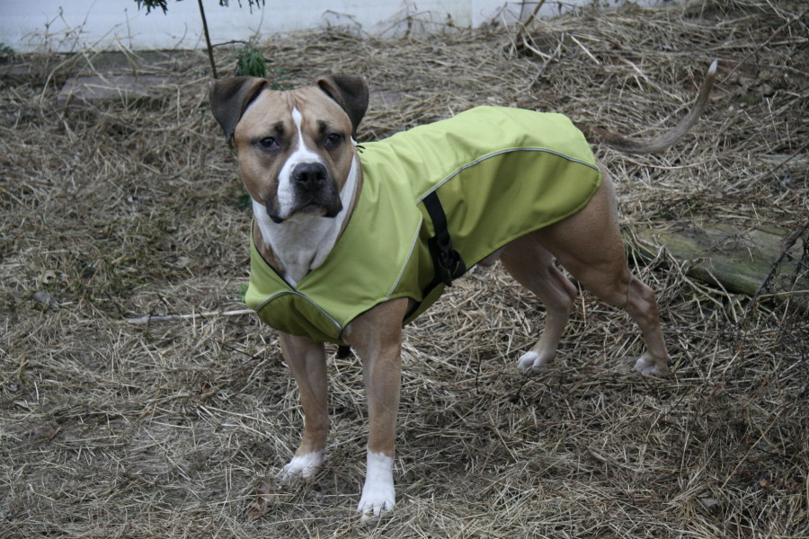 Large size excellent fit for amstaff