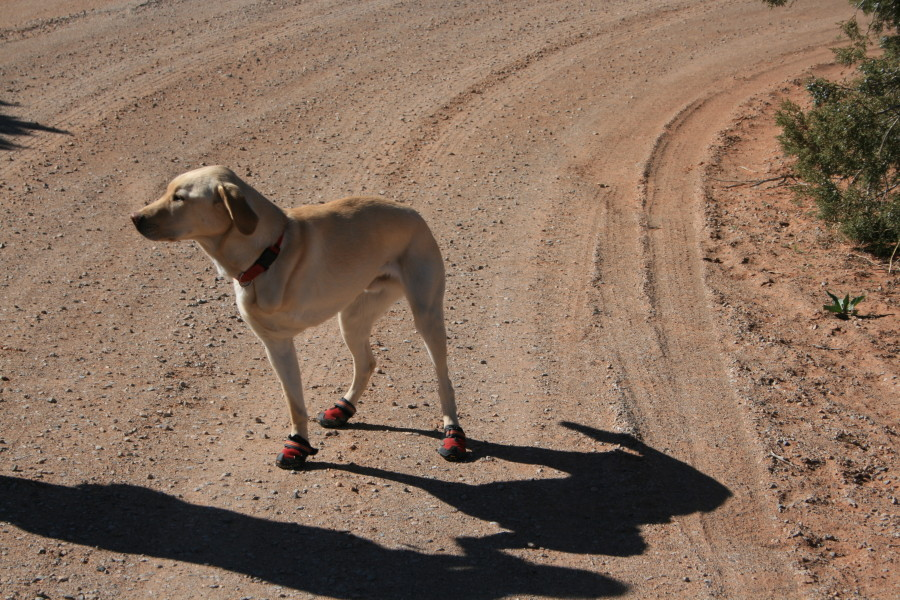 Our TRIPOD loves his Ruffwear shoes!