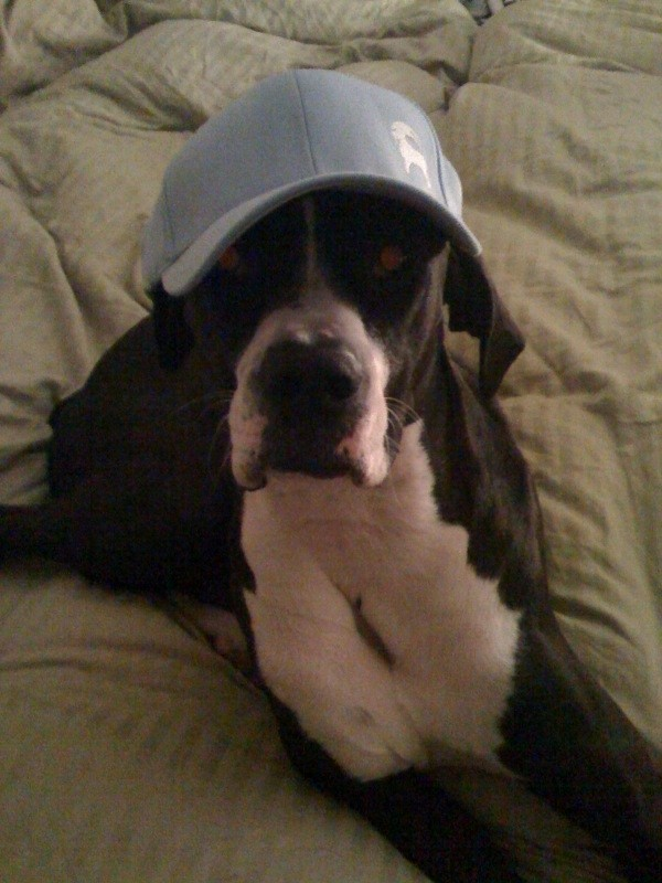 My dog's a fan!