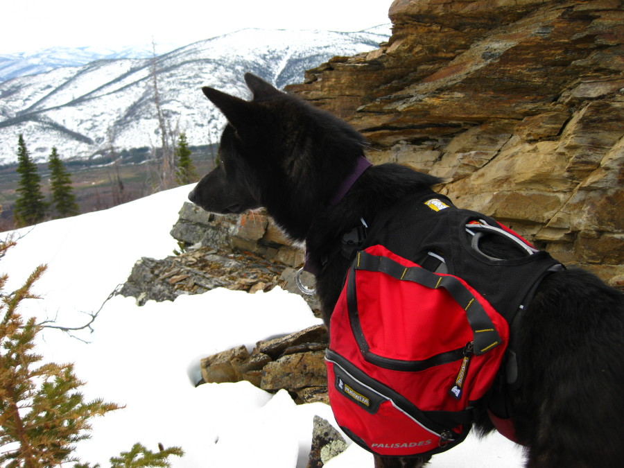 Now a worthy hiking buddy ...