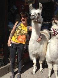 they look good with llamas