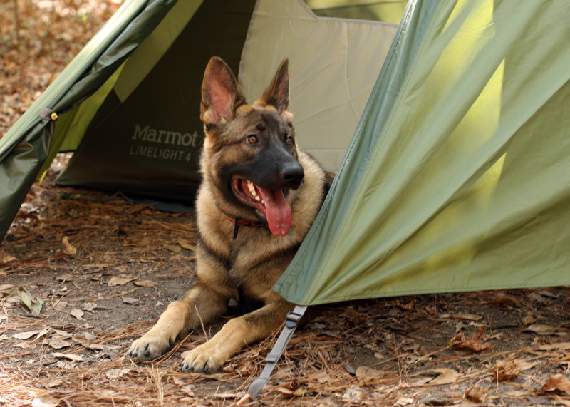 The pup and his tent in Alabama (part 2)