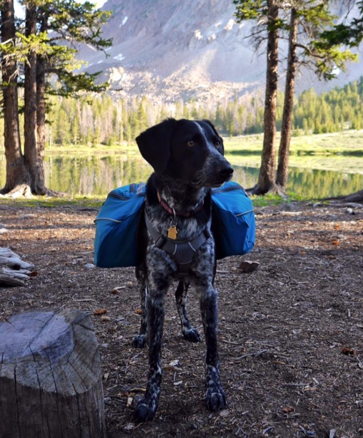 Great pack for backpacking