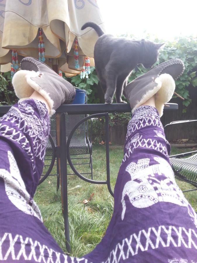 Sheepskin Moxie Slippers and Kitten
