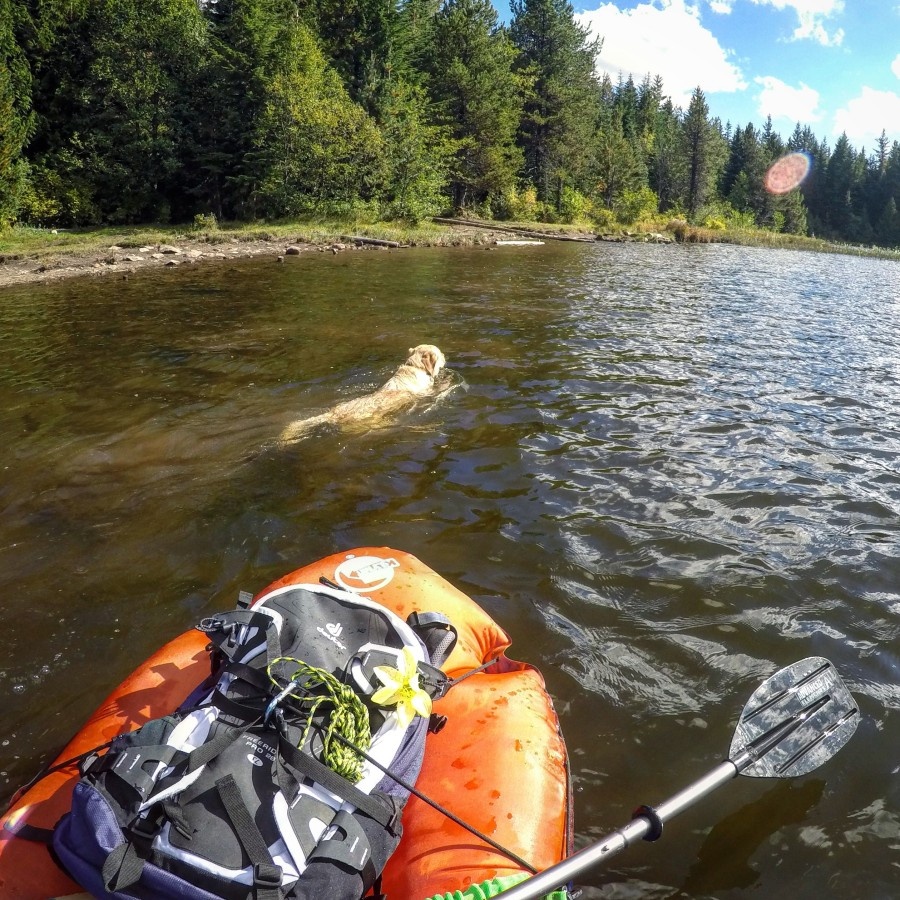 Out for a paddle with the dog!