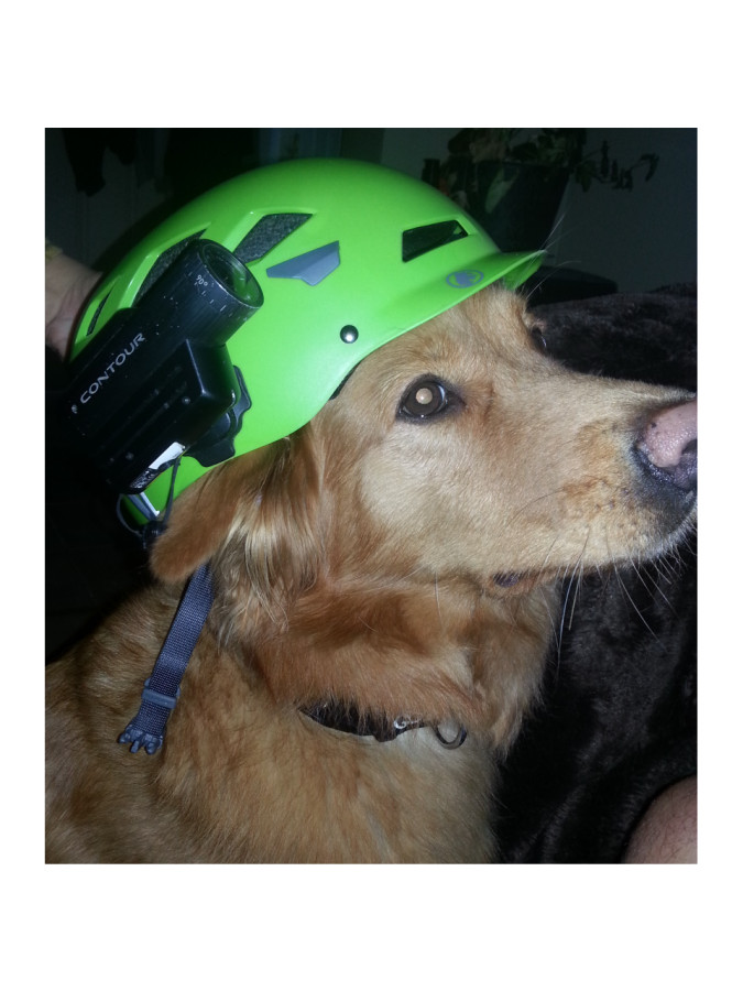 Camera on helmet, helmet on dog.
