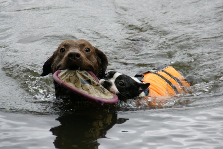 Awesome! Got two retrievers now