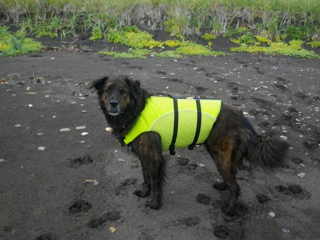 Pruhdoe in Lifejacket