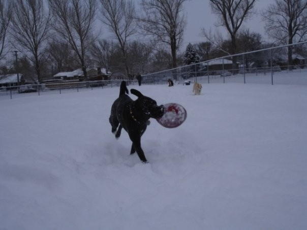 playing fetch in the winter