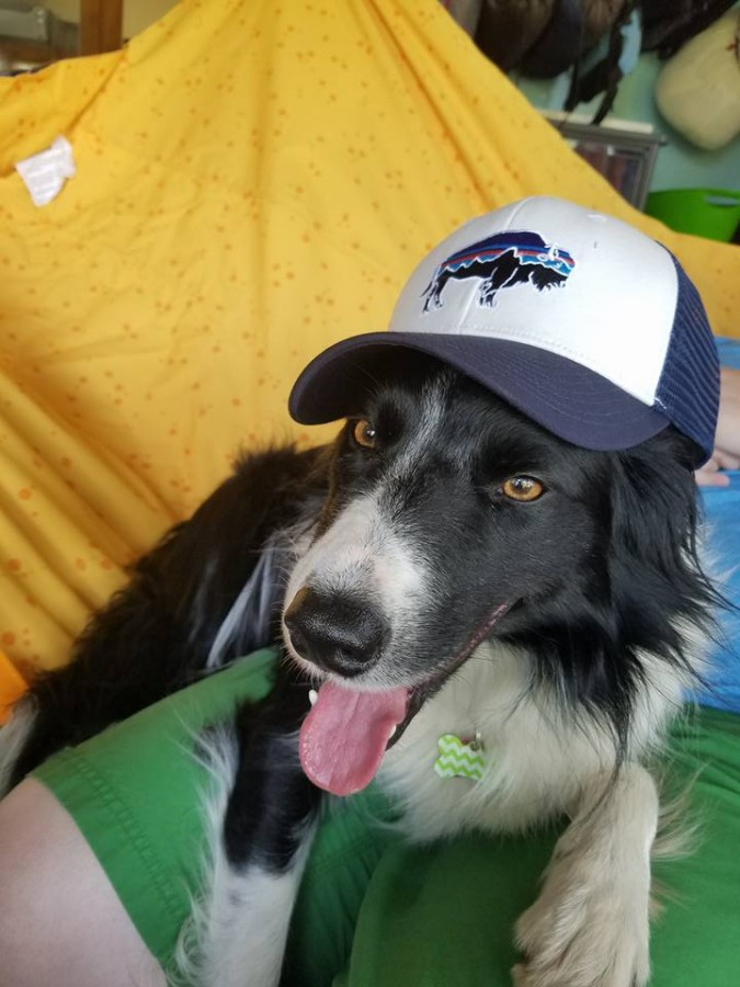 Everyone, even the dog, loves this hat!